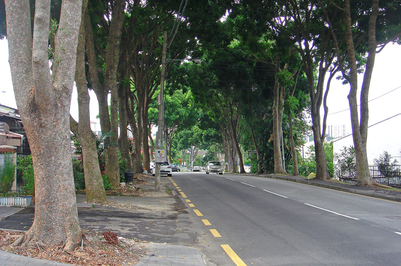 street-trees-kuala-lumpur