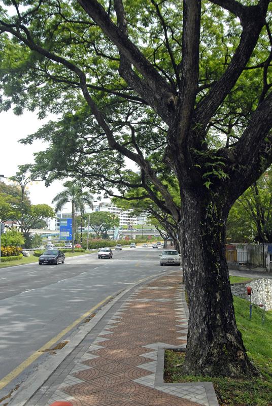 street-trees-shade-kuala-lumpur-highway