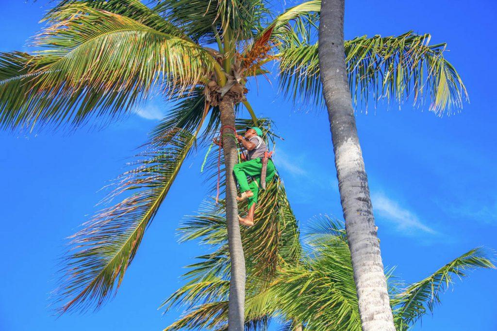 barefoot-coconut-picker-dominican-republic