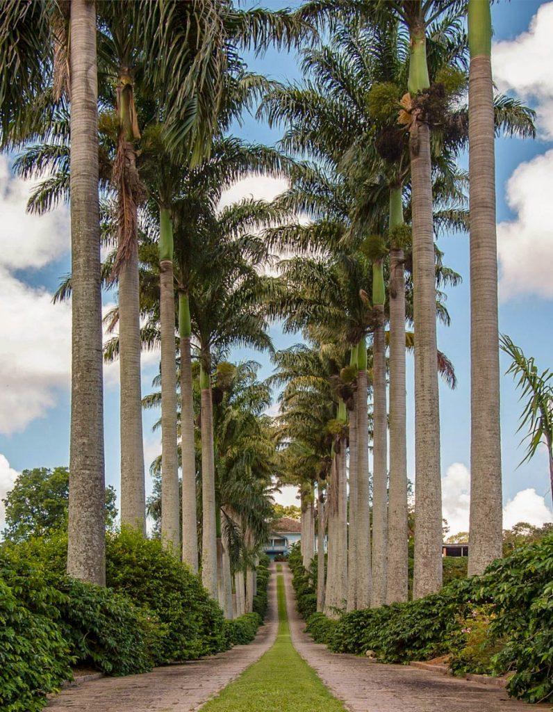 tropical-palms-avenue-driveway