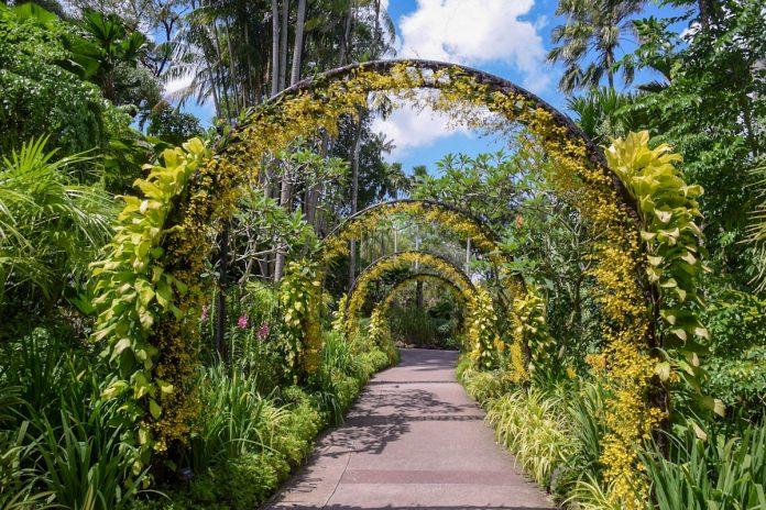 singapore-national-orchid-garden-oncidium-arches