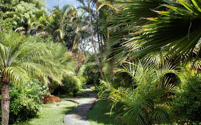tropical-garden-lush-plantings