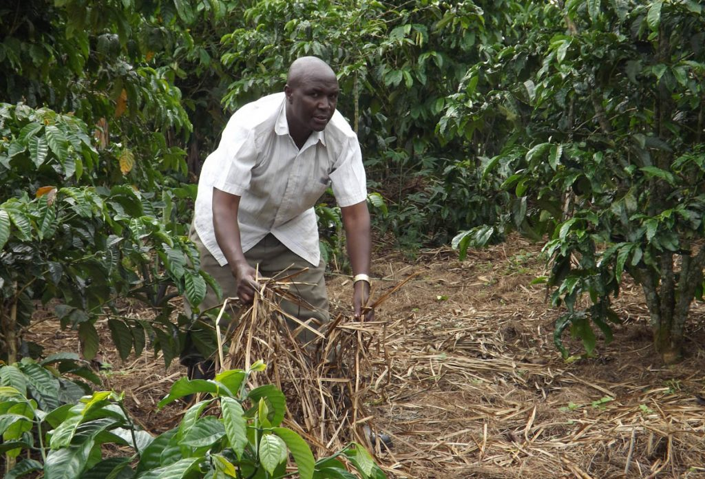 tropical-garden-mulching-straw