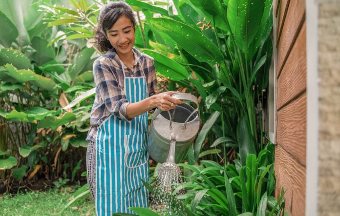 tropical-plant-food-watering-garden-indonesia