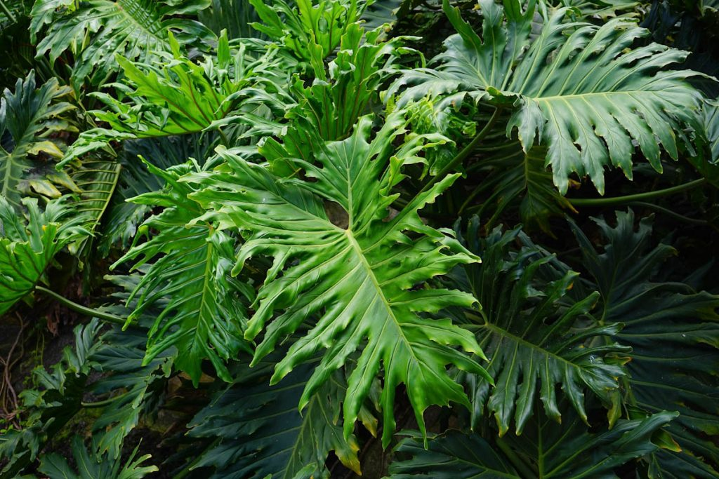 tropical-plant-foods-lush-leaves