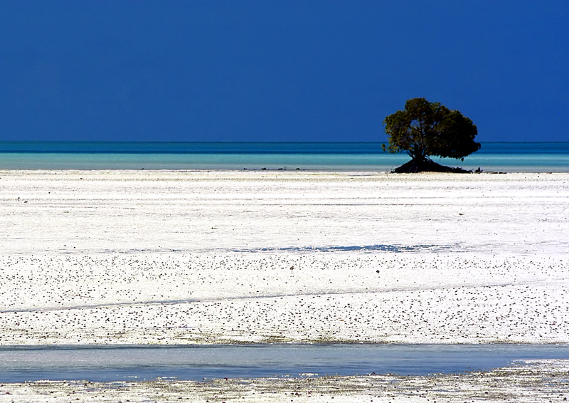 kiribati-white-sandbank-mangrove-tree