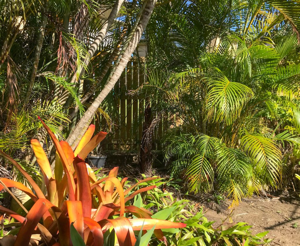 golden-cane-palms-with-bromeliads