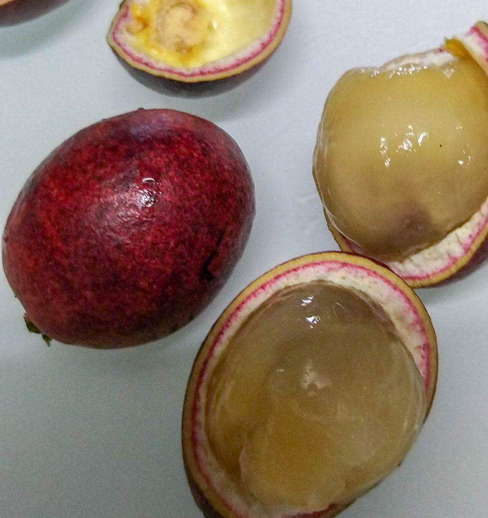 fiji-longan-pometia-pinnata-ripe-fruit-opened