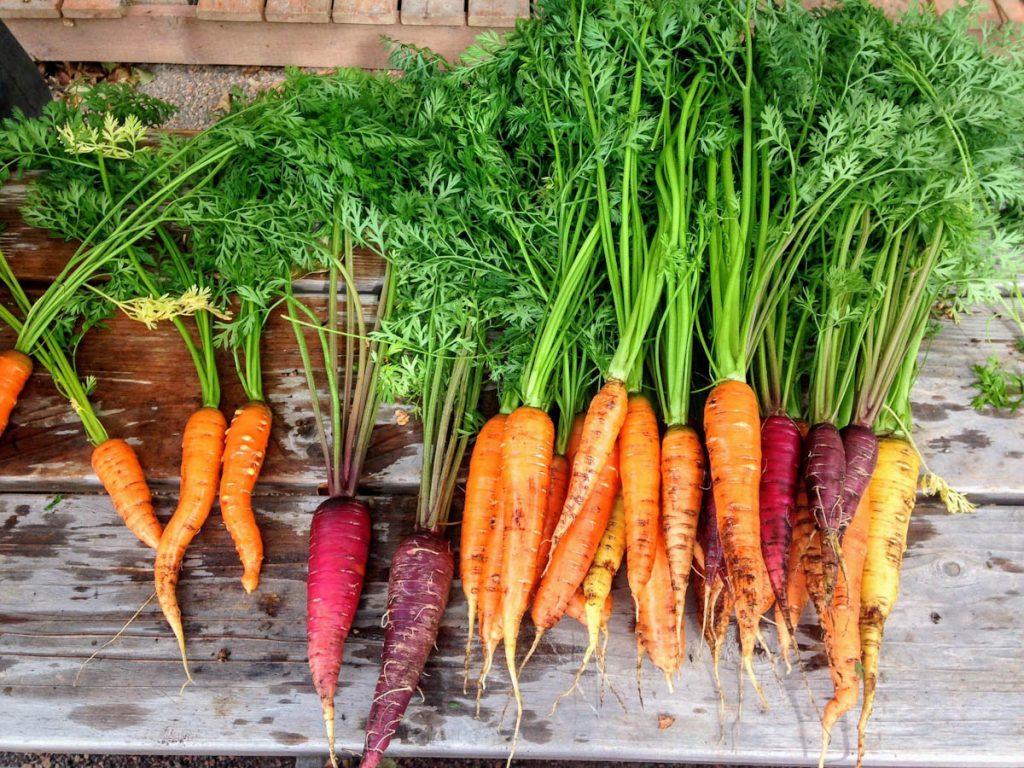 carrots-different-varieties