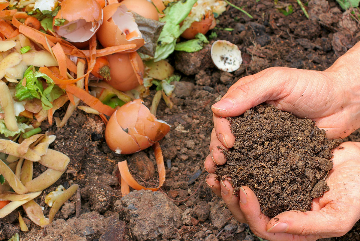 strawberry-growing-making-compost